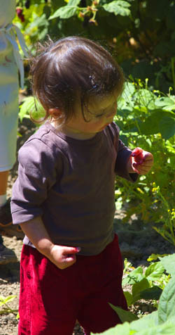 rima picking berries